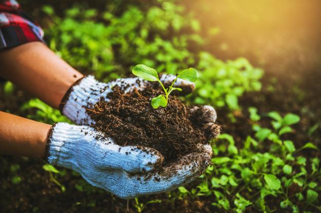 Organik Tarım Ürünleri Karaoklar Çiftliği