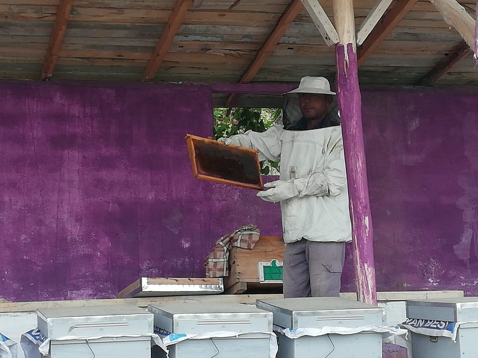 karaoklar organik ürünler çiftliği arı