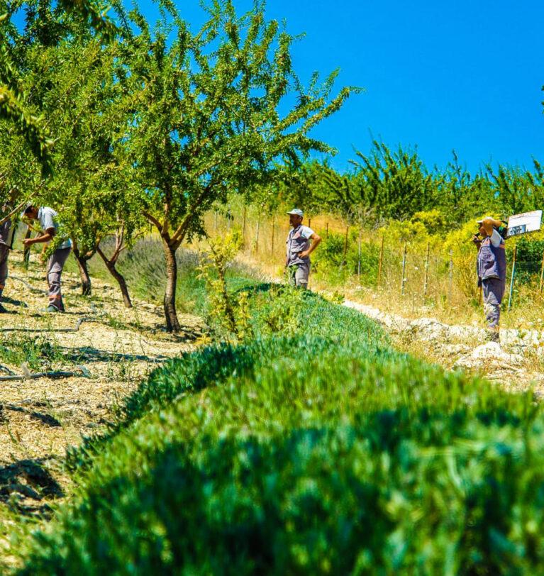 Kara Oklar'da Organik Tarım