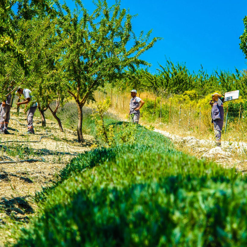 karaoklar organik ürünler çiftliği genel görünüm